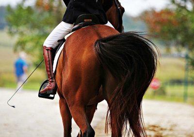 miller-hollow-farm-horse-boarding