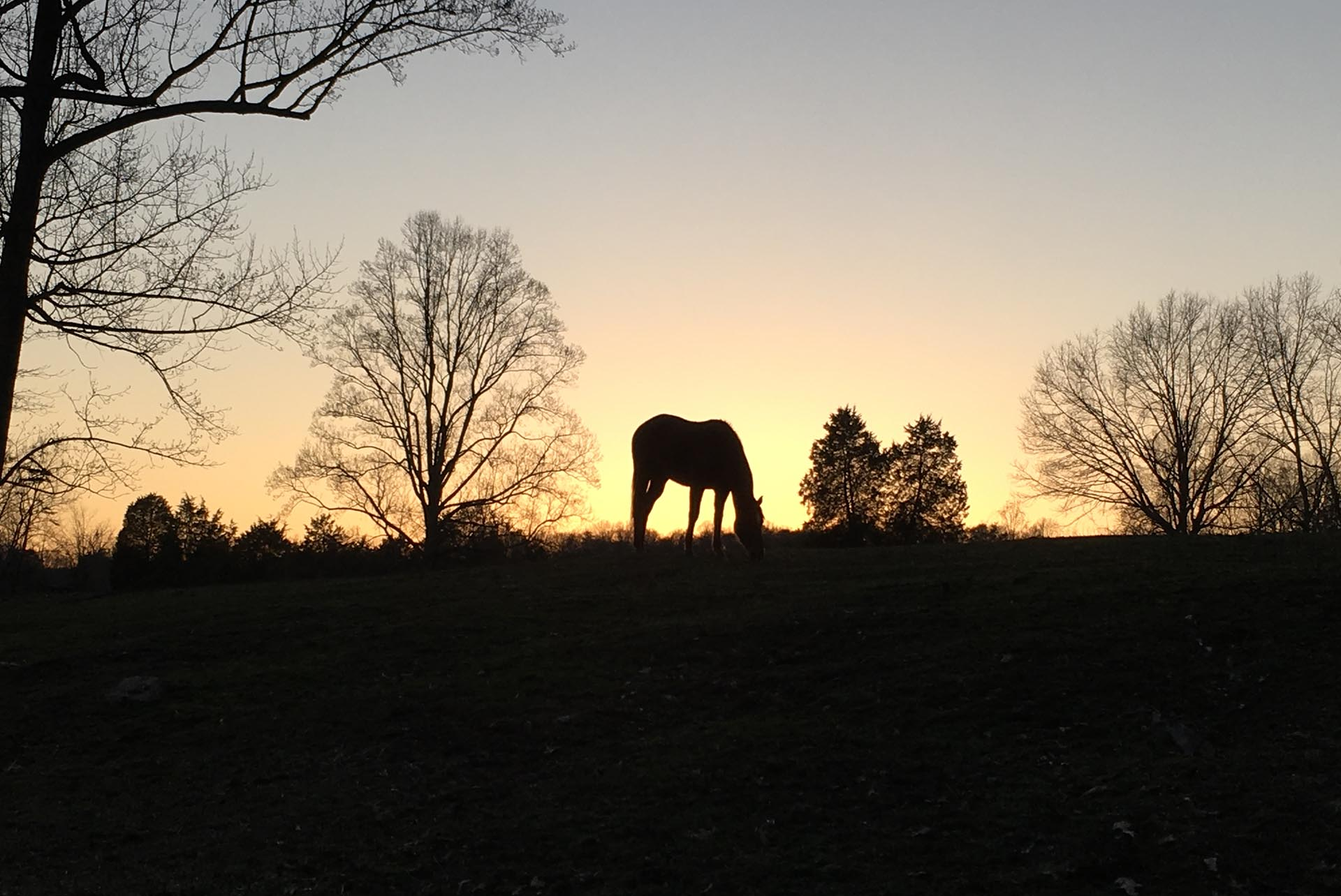Miller Hollow Farm Sunrise