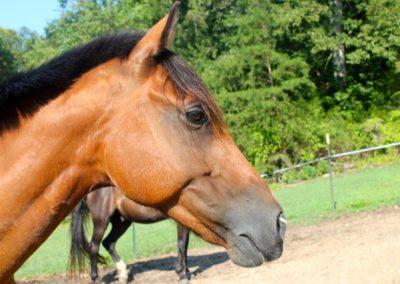 Nitrox Horse Lessons