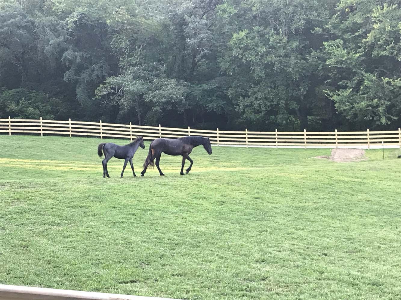 Horse Boarding at Miller Hollow Farm