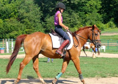 Horse Lessons and Training