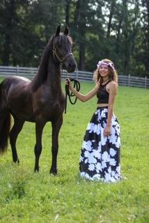 Nova Horse For Sale