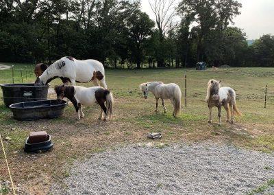 Horse Boarding 6